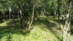 référence n° 81037312 : Orgnac-l'Aven - vente terrain ardeche orgnac l aven